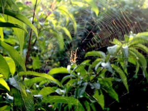 web.spinne