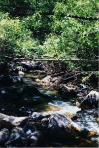 Flussgrun