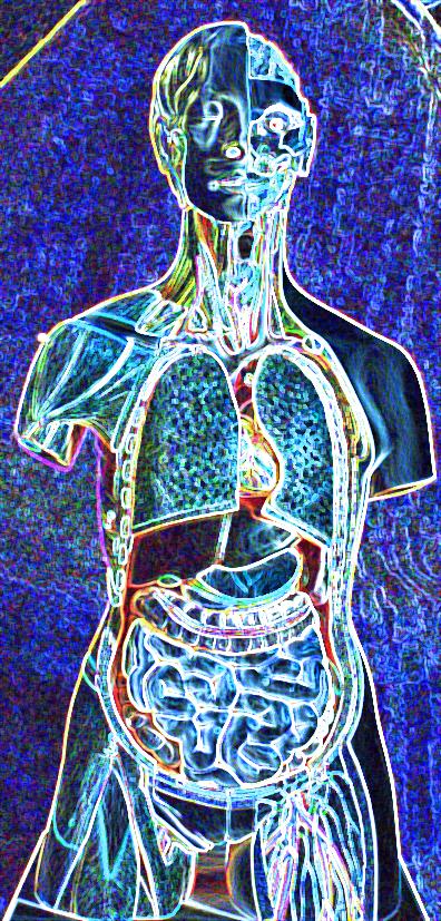 Anatomische Grundlagen | catalixx cuna