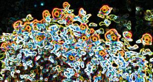SonneblufeldBun